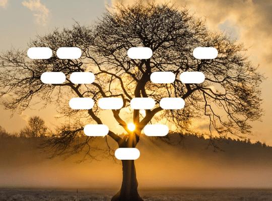 arbre généalogique excel vierge gratuit à télécharger
